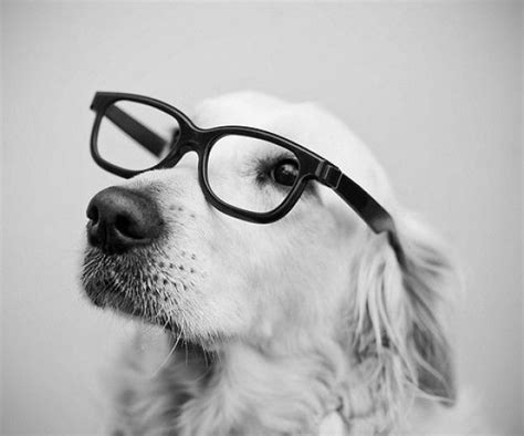 portrait  dogs  cats  glasses