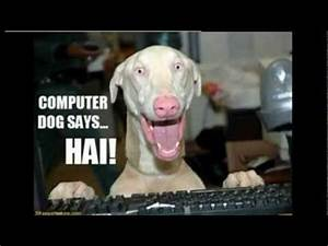 50 Funny Dog Faces Compilation, 50 Funny Pets And Funny ...  Funny