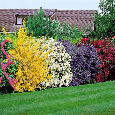 flowering hedge 5 flowering shrubs to plant that form a hedge for privacy