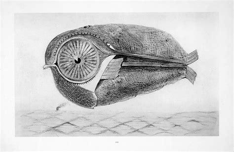 Clam Tree Wooden Bird And Big Eyed Fish Kunstmuseum Bonn
