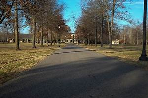 Christmas Lights Middle Tennessee Trees Along The Oakland 39 S Mansion Driveway To Be Removed