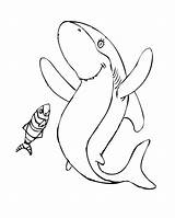 Coloring Pages Geographic National Shark Stanley Popular sketch template