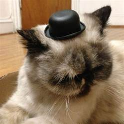 tiny hats on cats we like cats that wear tiny hats
