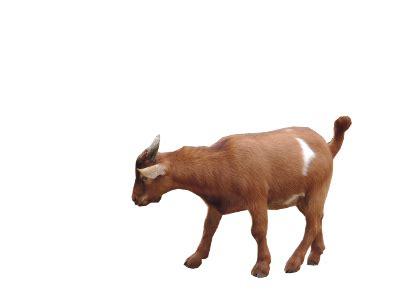 tupelo buffalo park  zoo tupelo ms