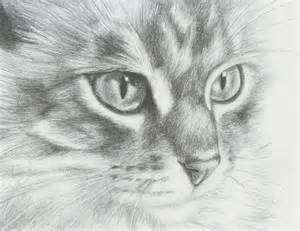 cat sketches 10 cat drawings showcase hative
