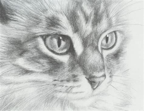 cute cat drawings showcase hative