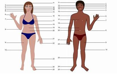 Human Clipart Both Genders Numbers Clip Parts