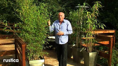 tailler bambou en pot entretenir et soigner un bambou en pot