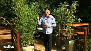 Bambous En Pot : entretenir et soigner un bambou en pot youtube ~ Melissatoandfro.com Idées de Décoration