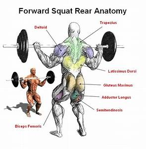 Rear View Of The Front Squat