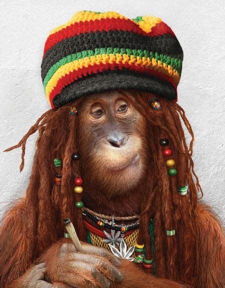 images  monkeys backgrounds funny monkey