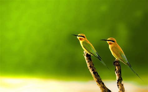 Animals Birds Wallpaper - 15 beautiful birds wallpaper collection hd edition stugon