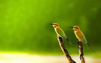 Wallpapers Birds Bird Background Desktop Stugon Colorful