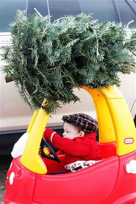 kid driving tree home pictures   images