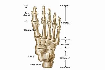 Metatarsalgia Foot Surgery Treatments London