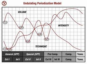 a simple guide to periodization for strength training With undulating periodization template