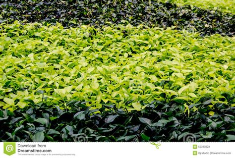 colorful ground cover colorful ground cover stock photo image 50313822