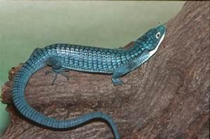 List All Reptiles :: Saint Louis Zoo
