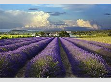 The best fairs and events to visit in Provence this