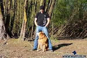 Welche Blautöne Gibt Es : welche techniken gibt es im hundetraining wufflog ~ Orissabook.com Haus und Dekorationen