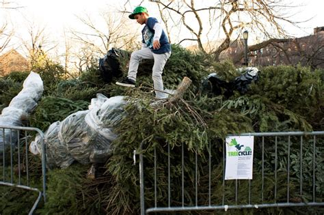 awesome picture of christmas tree recycling south dublin