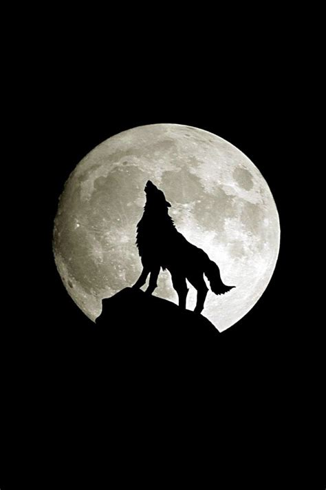 Black Wallpaper Iphone Moon by Wolf Moon Wolf Moon Wallpaper For