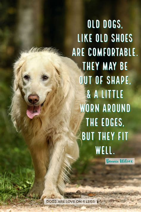dogs  shoes  comfortable dog dog quotes