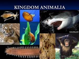 Image Gallery kingdom animalia