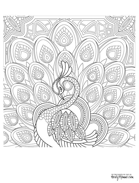 peacock coloring pages for adults peacock coloring page coloring pages