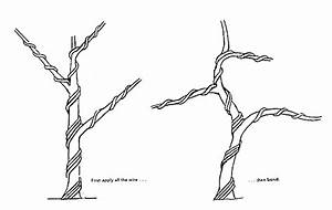 wire by the ton a simple lesson bonsai bark With wiring yew bonsai