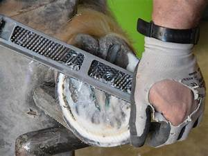 The 5 Best Hoof Rasp To Keep Your Horses Feet Safe