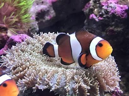 Brooklynella Fish Reef2reef Marine Stages Treatment Diseases
