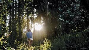 Forest Bathing  Shinrin-yoku   Forest Therapy For Stress And Anxiety