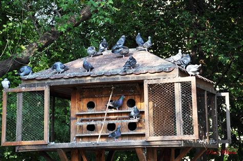 create a house pigeon home design www pixshark com images galleries with a bite