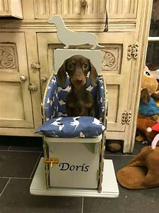 Adorable Dachshund Has To Sit Upright In High Chair To Eat