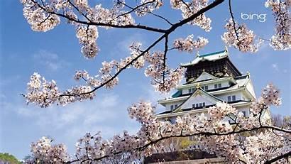 Blossom Cherry Japanese Spring