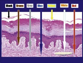 dermoscopy plastic surgery key