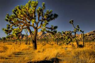 usa national parks images joshua tree nationalpark hd wallpaper and background photos 12451565