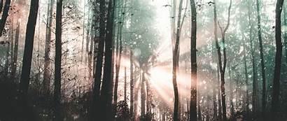 Forest Fog Birds Mystical Trees 1080p Dual