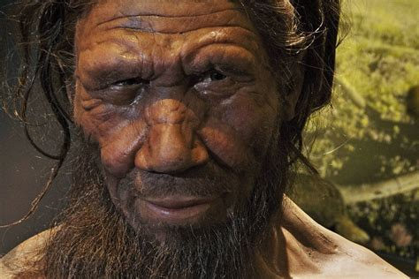 Apparently We're All A Bit Neanderthal