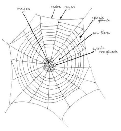 la toile d araignee ii la toile d araign 233 e
