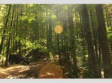 Free photo Jeep, Forest, Woods, Sun Rays Free Image on