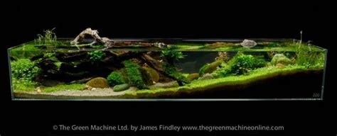The Green Machine Aquascape by Tributary Aquascape By Findley Terrarium Aquarium