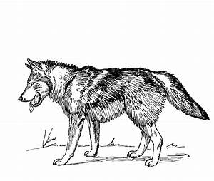 Tribal howling wolf clipart - Cliparting.com