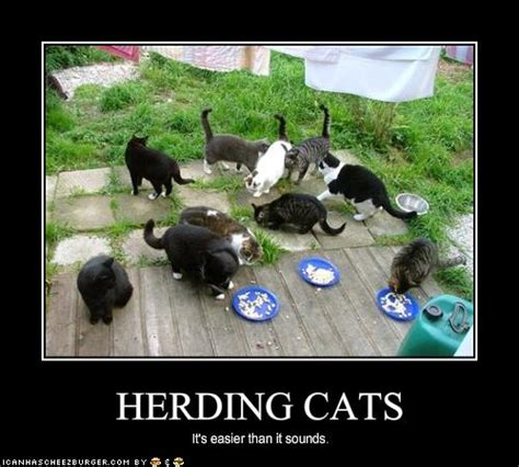 herding cats cheezburger funny memes funny pictures