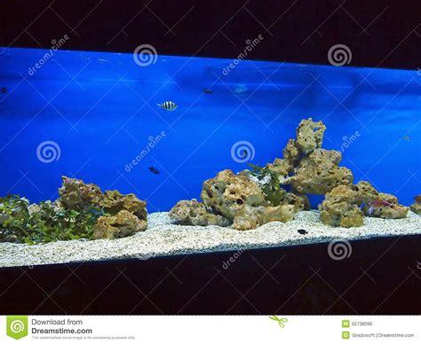 grand et aquarium avec le bleu d eau de mer photo stock image 55738095