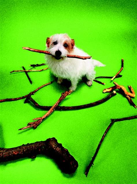 how to keep dogs from destroying trees bushes pets