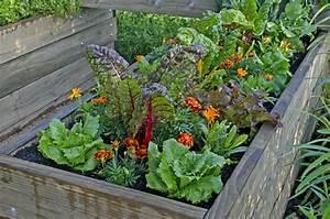 Hochbeet Blumen Bepflanzen : hochbeet bepflanzen so planen sie den anbau richtig ~ Watch28wear.com Haus und Dekorationen