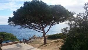 Mediterrane Bäume Winterhart : zitronenlust onlineshop f r mediterrane pflanzen und b ume pinus pinea pinie mittelmeer kiefer ~ Frokenaadalensverden.com Haus und Dekorationen