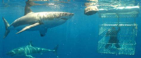 swimming safaris sa tourism